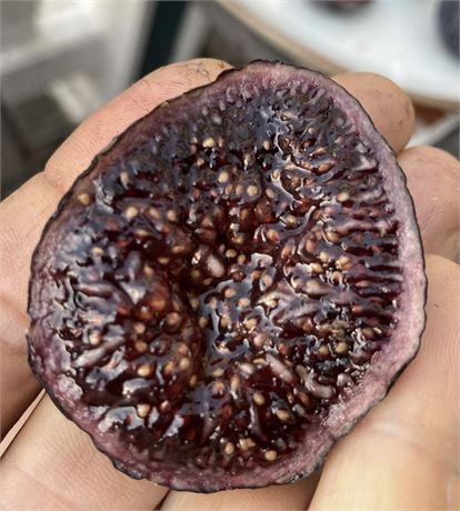 The Black Manzanita fig is a variety discovered in the San Francisco Bay Area